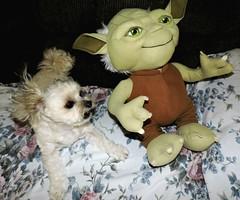 National Kiss And Make Up Day (marilyntunaitis) Tags: kissandmakeupday dog pet bella yoda plush starwars