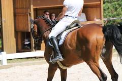 _MG_5757 (dreiwn) Tags: dressage dressurprüfung dressurreiten dressurpferd dressyr ridingarena reitturnier reiten reitverein reitsport ridingclub equestrian horse horseback horseriding horseshow pferdesport pferd pony pferde dressur dressuur tamronsp70200f28divcusd