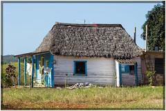 Cuba 2016 - Viñales - Famhouse (Ulster79) Tags: architektur haus himmel häuser pflanzen reetdach architecture flora houses outdoor sky thatchedroof viñales pinardelrío cuba cu