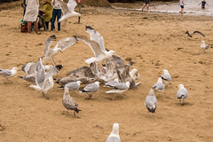fight (pamelaadam) Tags: 2016 animal digital summer scarborough engerlandshire bird sea people lurkation august digtal fotolog thebiggestgroup holiday2016