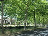 Trees lining Canal du Midi, afternoon, Toulouse, France