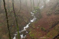 Bosques de ivierno (Pruden Barquin) Tags: paisaje landscape largaexposicion longexposure sedas silks bosques forest niebla fog hayas hayedos ambiente atmosfera naturaleza nikon parquenatural gorbeia paisvasco basquecountry