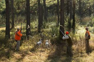 Alabama Luxury Quail Hunt - Guntersville 33