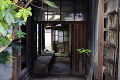 ギンザヤ隣家 (m-louis) Tags: 30110mm nikon1 ehime house japan matsuyama mitsu mitsuhama plant shikoku 三津 三津浜 四国 家 廃屋 愛媛 松山 100faves explore