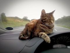 Photo of Enjoying road trip.
