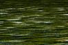 Algen in der Saale / Algas in the river Saale (Miwedi) Tags: 2017 algen fluss saale thüringen ziegenrück abstrakt algas river