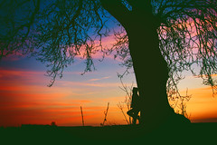 The Edit (iratebadger) Tags: nikon nikond7100 nature nikonphotography nikkor england eastridings evening rural countryside country clouds colours colors sky silhouette shadows sunset skyscape solitary outside outdoors orange pink blue trees tree iratebadger standing standingalone