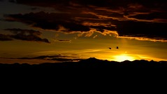Say goodnight 2793 (Jeff Brough) Tags: geese sunset dusk sundown idaho clouds birds jeffbrough birdsatsunset