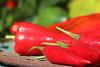 CKuchem-5616 (christine_kuchem) Tags: bauerngarten biogarten bioqualität ernte erntezeit fleischtomate garten gemüse gemüsegarten grün gurke nutzgarten paprika peperoni pflanze rarität sommer sorte sorten sortenvielfalt vielfalt zucchini bio biologisch frisch gelb gesund lecker natürlich orange reif rot selten unbehandelt