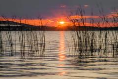 shining through the weed (ralfkai41) Tags: sunset sonne sonnenuntergang schilf outdoor lake natur sun eveningglow water abendrot reflexion nature reflektion see wasser weed