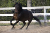 Atta and Cally (Erica.Monjeau) Tags: horse mustang trot canter liberty gallop equine stable