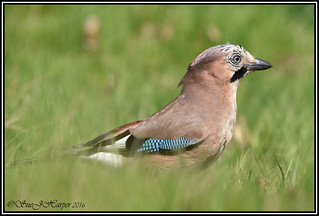 Pulborough Brooks Reserve (cw) (16)