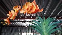 Exposição de flores no Mercado das Flores - Ceasa - São José do Rio Preto-SP, Brasil (J. Garcia Dias) Tags: arte artesanato mercado flores ceasa rio preto brasil brazil são josé sp exposição