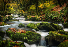 Late Autumn Moss, Golitha Falls, Cornwall (Mick Blakey) Tags: grass autumn moss golithafalls cornish water boulders silky leaves moor tree river moorland woodland waterfall trees green gorse cornwall grasses orange
