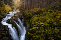 Harmony Across (Luciano_de_Castro) Tags: trees landscape forest nature river tree canon waterfall falls photography stream eos rapids paradise creek fotografia gorge cascades landscapephotography usa northamerica unitedstates 760d t6s lucianodecastro solducriver washingtonstate olympicnationalpark solducfalls