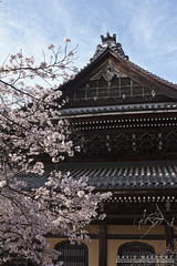 Cherry Blossom & Building (DMeadows) Tags: dmeadows davidmeadows japan japanese asia asian holiday vacation tour tourism travel trip visit culture building architecture roof tiles decoration decorations cherry blossom sakura wood wooden nanzenji temple kyoto