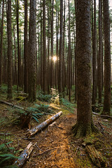 Forest Sunset (conradolson) Tags: trees bc sunset vancouverisland forest marbleriverprovincialpark canada hiking coolsky northamerica britishcolumbia walking portalice ca