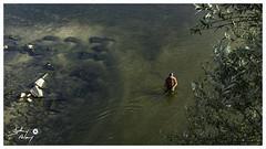Pêcheur en Loire (touflou) Tags: cosnesurloire nievre loire fleuve rivière river pecheur peche