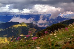 In the mountains, the flowers are beautiful ... (mark.paradox) Tags: germany bavaria obersalzberg berchtesgaden eaglesnest alps europe summer scenery landscape landmark beauty travel spectacular view perfect picture nature outdoor picturesque mountain stunning adventure flowers breathtaking highland clouds