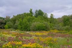 170824-10 Des champs fleuris (clamato39) Tags: fleurs flowers parclessaules villedequébec quebeccity provincedequébec québec canada nature outside ciel sky clouds nuages