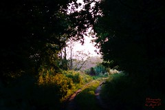 Exit (Jurek.P) Tags: mazury masuria poland polska forest light nature natura summer lato jurekp sonya77
