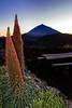 Tajinastes (López Pablo) Tags: tajinaste teide izaña tenerife canaryislands spain nature nikon d90 green red flower sunset mountain