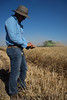 Man looks at the seeds during harvest. (CIMMYT) Tags: wheat obregon research cimmyt farmers food seed security field station harvest