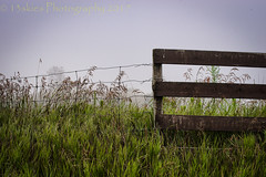If I Didn't Have To (HFF) (13skies) Tags: fencefriday alone fog morning quiet countryroad countryside field farming farm wirefence wireandwoodfence two different green grow wooden solitary sonyalpha99 sony 13skies