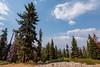 2017Seki-008-HDR (chenhengyu) Tags: 20170901 crystalcave kingcanyonnationalpark labourday longweekend rv seki sequoianationalpark sequoiatree