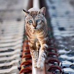 Con chulería se nace #gatto #gatoscallejeros #gato #cats #photocats #instacats #neko #meow #gatze #gatos #catsofinstagram #catsofworld #siames #tabbypoint #koshka #catsofworld #animalaugh thumbnail