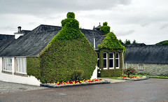Glenfiddich Distillery (Celeste Messina) Tags: distilleria distillery whisky scotland scozia scottish scozzese edera ivy glenfiddich natura nature piante aiuola flowerbed tetto roof