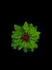 58402.01 Enkianthus campanulatus (horticultural art) Tags: horticulturalart enkianthuscampanulatus enkianthus leaves mandala medallion