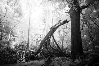 Random Wood - 28 May 2017