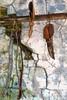 AquidSela 160616 021 Selaria Renascer painel tralhas faca, cinto e coldre linda parede textura (Valéria del Cueto) Tags: aquidauana matogrossodosul brasil selaria couro objetos instrumentos boi pecuária ´fazenda pantanal norumo decueto turismo aventura tradição campo valériadelcueto