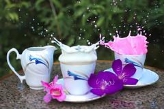 Shake.......shake ........shake  Milkshake (Chandana Witharanage) Tags: srilanka southasia splash milk milkshake teacups creativephotography myfirstattempt tabletop freshflowers movement drop drops droplets freeze action artistic colour colourful dynamic