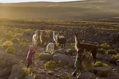 Rural Life (Fontanil) Tags: bolivia uyuni coqueza salardeuyuni uyunisaltflat rural comunidad brother sister children llamas sunset southamerica travelphotography culture canon600d