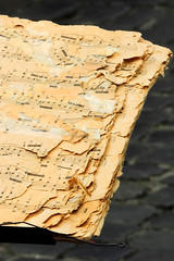 An old music notebook used by a street musician in Rome, Italy (wuestenigel) Tags: torn streetmusician italy rome tapedup musicnotebook old noperson keineperson texture textur alt desktop nature natur abstract abstrakt tree baum wood holz environment umwelt color farbe dirty dreckig outdoors drausen travel reise art kunst soil boden water wasser paper papier earthsurface erdoberfläche pattern muster closeup nahansicht