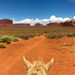 Riding horses at Monument Valley in Navajo Nation