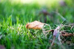 Leaf & Grass