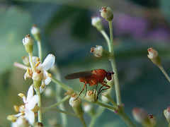 B e a s t (ce_lia95) Tags: sonycybershot sonydsch1 camera capture picture photo photographie shot nature light scene moment insect orangeinsect beast grass flowers background tree whiteflower button bestiole