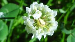 DSC05257a (alfredoeloisa) Tags: plantas plantasterrestres plantasvasculares traqueofitas angiospermas plantae tracheophyta tracheobionta magnoliopsida