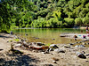A river in Northern California (Stans Gallery) Tags: river water bathing riverscape trees