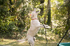 frodo-service-dog-in-training-8 (Little Earthling Photography) Tags: dog labradoodle water servicedog boy summer