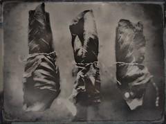 Restrain(ed)-11214 (Poetic Medium) Tags: cabbage stilllife produce blackandwhite kitcamghostbird snapseed hipstamatic ipod food