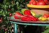 CKuchem-5602 (christine_kuchem) Tags: bauerngarten biogarten bioqualität ernte erntezeit fleischtomate garten gemüse gemüsegarten grün gurke nutzgarten paprika peperoni pflanze rarität sommer sorte sorten sortenvielfalt tomate vielfalt zucchini bio biologisch frisch gelb gesund lecker natürlich orange reif rot selten unbehandelt