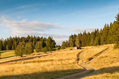 złote pola (MichalKondrat) Tags: drzewa sierpień polska 2017 natura kotlinakłodzka przyroda masywśnieżnika niebo pejzaż sudety zieleń dolnośląskie góry chmury krajobraz gminabystrzycakłodzka województwodolnośląskie poland pl 35mm