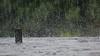 ... rainy days ... (wolli s) Tags: drops regen regentropfen tropfen rain raindrops rainy days rainyday explore explored