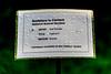 CAPTIVE II BY ANA DUNCAN - SCULPTURE DUNCAN [WHEN WILL THE RAIN STOP]-1324728 (infomatique) Tags: captiveii sculpture sculptureincontext streetsofdublin publicart anaduncan femaleform rain art culture williammurphy infomatique fotonique