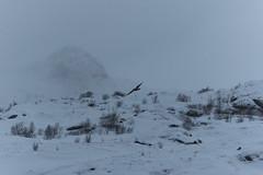 IMG_2522 (alessandro orfanù) Tags: norway lofoten vesteralen hurtigruten winter snow northernlight