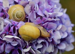 Balade dans les fleurs